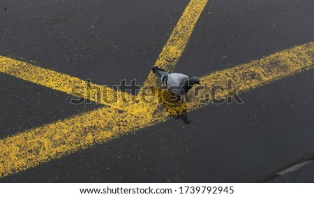 bird image bird sitting on the grey yellow lined road during daytime #1739792945