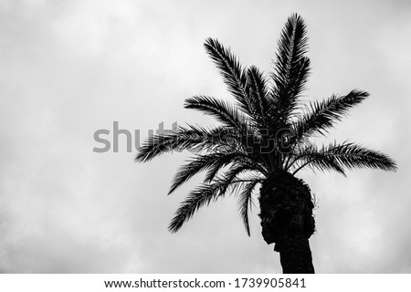 Black and white photography of a palm tree