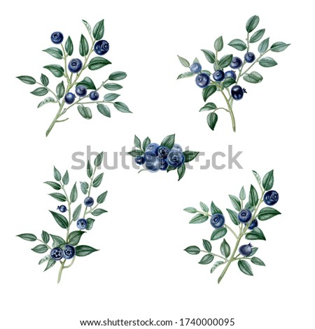 Blueberry branches set hand drawing vintage clip art isolate on white background