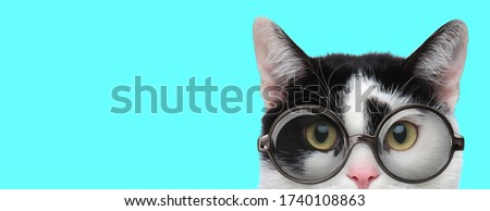 nerdy funny metis cat wearing eyeglasses with only half of face exposed on blue background