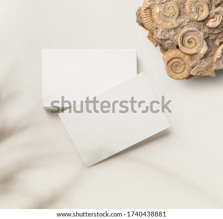 minimalist business card mockup / template with a stack of cards and a single one, an amonite, and subtle plant shadow on a bright paper background - ideal for elegant branding identities - flatlay