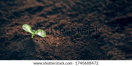 Green plant growing in good soil. Banner with copy space. Agriculture, organic gardening, planting or ecology concept. Young sprouts, seedlings growing. New life concept Royalty-Free Stock Photo #1740688472