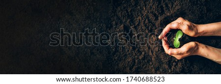 Woman hands holding green seedling, sprout over soil. Top view. Copy space. New life, eco, sustainable living, zero waste, plastic free, earth day, investment concept. Gospel spreading. Royalty-Free Stock Photo #1740688523