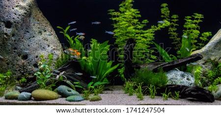 Beautiful aquarium. Juwel aquarium. 450 liters planted freshwater aquarium.