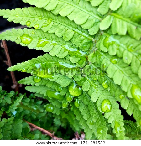 Macro photo green fern plant. Stock photo nature plant green fern with rain drops #1741281539