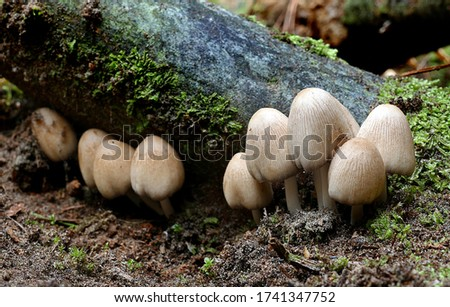 Close-up picture of mushroom,  white mushroom