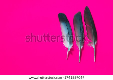 Frame of black feathers on a Pink background. Emo style frame made of boa (feather scarf) isolated on purple. exotic soft beautiful black feather. Feathers laid out around. A fan in dark colors