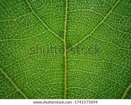 macro cellular tree leaf fractal Royalty-Free Stock Photo #1741573694