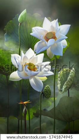 Fine art - Beautiful white lotus flower and lotus flower plants, pure white lotus flower, symbol of VietNam. Royalty-Free Stock Photo #1741874945