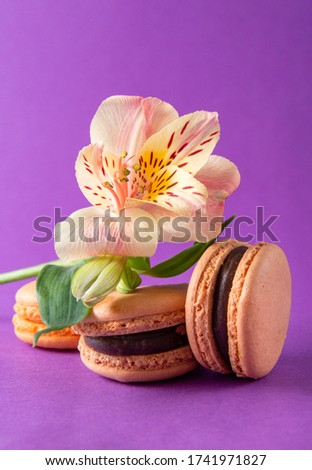 French cookies close-up , 3 beige and yellow French macaroons and a green flower Alstroemeria on a purple background,  #1741971827