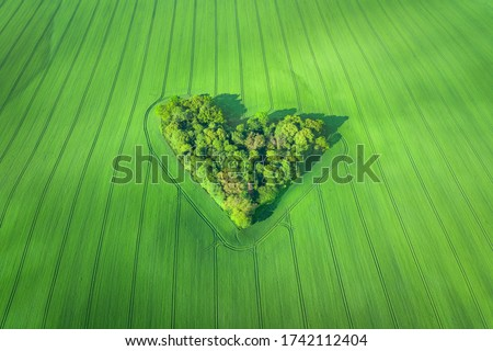 Aerial view of heart-shaped small forest surrounded by wheat field in Poland Royalty-Free Stock Photo #1742112404