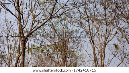 Trees without leaves, seasonal changes #1742410715