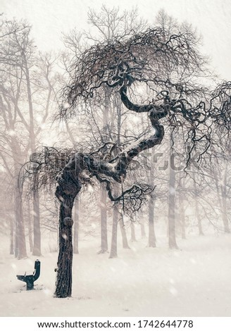 . monochrome picture with a know by tree and a bench in winter during snowfall