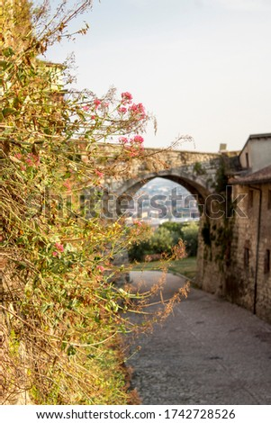 Close up. Medieval castle (Castello di Brescia) with drawbridge & ramparts. Pink flower at sunset #1742728526