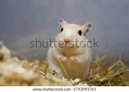 Curious gerbil among cutter shavings