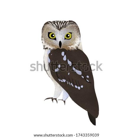 Portrait of a beautiful grey owl, children's book illustration