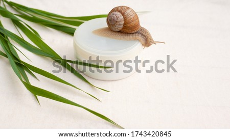 skin rejuvenation cosmetics on white background with snail and green grass, cream with snail mucin, skin hydration, spa. Royalty-Free Stock Photo #1743420845