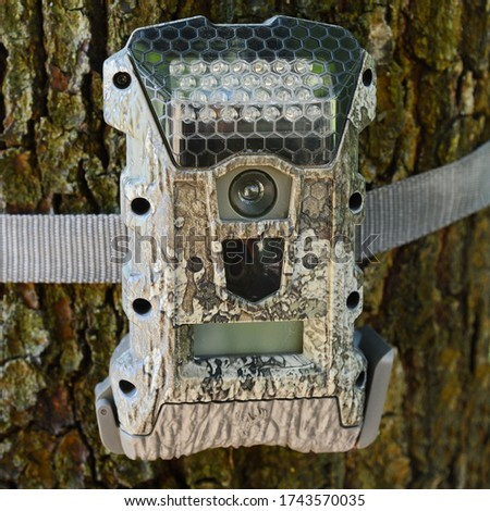 Camera attached to a tree, used by hunters to spy wild animals. Black Trail Cam camera on Poplar Tree capturing wildlife such as deer as they walk by. Camouflage Night vision camera on a tree.