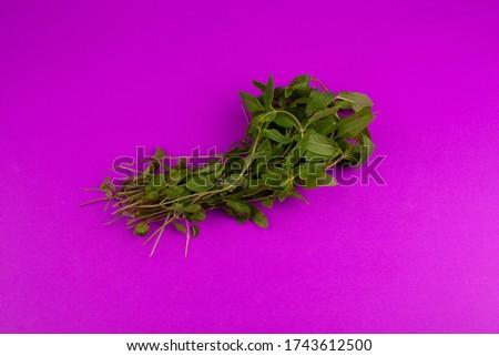 green herbs on the purple floor #1743612500