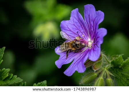 A close up of a bee on a flower, with a shallow depth of field