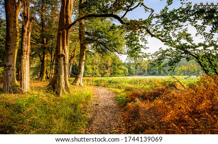 Forest trail in autumn scene. Forest trail view #1744139069