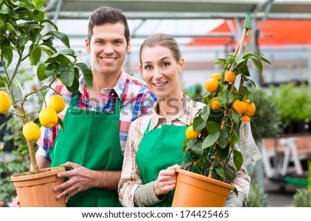 Florist or gardener in flower shop, greenhouse or nursery #174425465