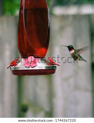 Hummingbird feeding on beautiful spring day. Backyard photos taken in mid day. Love when the birds come to stop by for a quick snack.