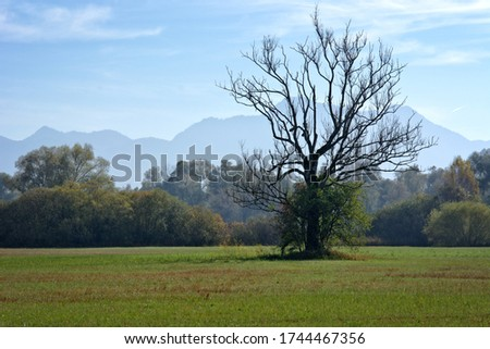 landscape pic having plain field and tree in the beautiful morning