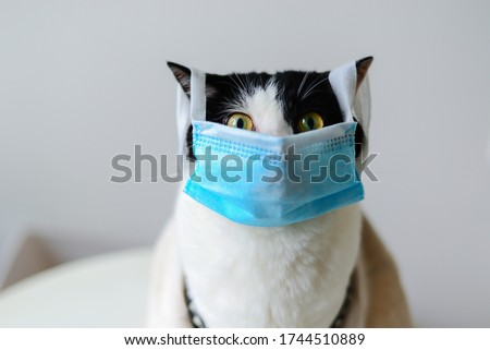 2020 New cat photo, scared face. COVID-19 Pandemic coronavirus Cat wearing face mask protective for spreading of disease virus SARS-CoV-2.