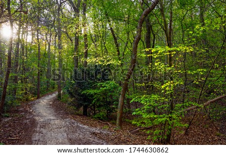 Forest trail in deep woods. Trail in deep forest. Forest trail view #1744630862