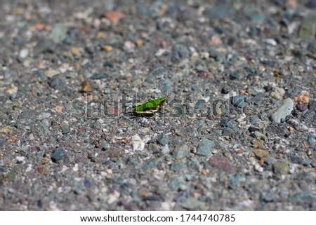 Beautiful green grasshopper on the asphalt background. Grasshopper macro view. Meadow grasshopper.