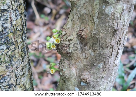 Ebony tree trunk with flower sprout in ebony forest reserve chamarel
