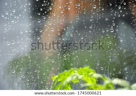 Raindrops on the transparent window pane. Background of raindrops on a wet, gray and opaque glass texture. Reflection in the window. Outside, the weather is rainy. Flowers on the window.