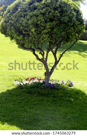 a front view beautiful park daytime under the sun scenery green trees grass plants #1745063279