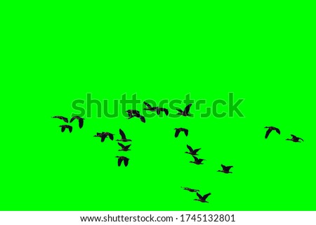 Group of birds with isolated sky