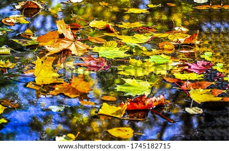 Autumn leaves in puddle of water #1745182715
