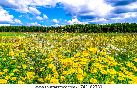 Summer rural meadow flowers landscape. Summer meadow flowers #1745182739