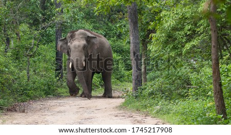 A big angry male Elephant (Tusker) in Jim Corbett National park #1745217908