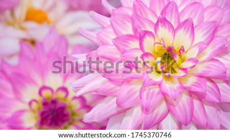abstract flower surface photo for background