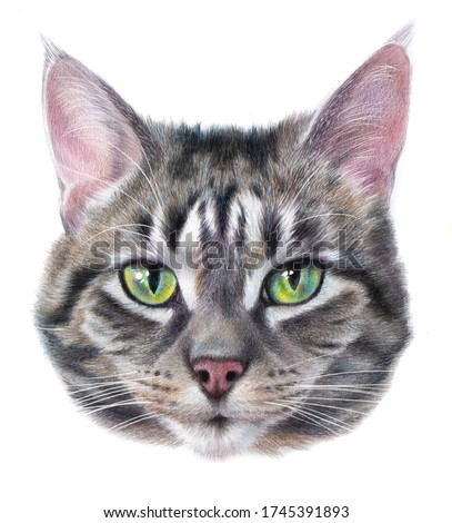 Detailed realistic color portrait of a striped gray cat with green eyes. Cat head drawing Isolated on a white background.