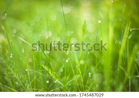 Green grass with dew droplets on meadow field in morning light . Freshness and purity of spring nature. Fresh Green background with copy space