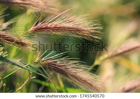 Wheat plants up close in a field  #1745540570