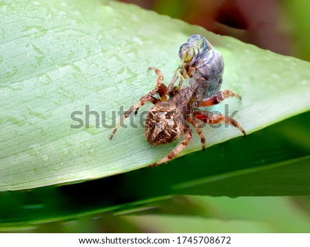 Spider hunt best quality pictures spider in leaf
