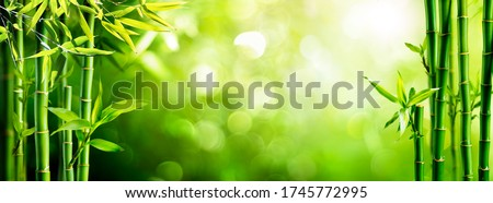 Fresh Bamboo Trees In Forest With Blurred Background  Royalty-Free Stock Photo #1745772995