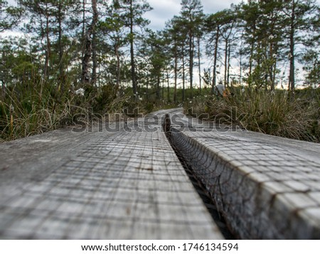 Bog forest natural background. Swamp vegetation, wooden footbridges in the swamp, wild vegetation, Niedraju Pilkas swamp, Latvia