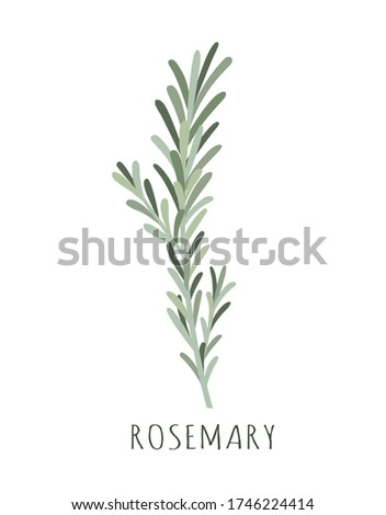 rosemary vector illustration, herbs and spices rosemary, fresh rosemary sprig with lettering isolated on white #1746224414