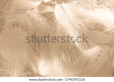 Beautiful abstract white and brown feathers on white background and soft yellow feather texture on white pattern and yellow background, feather background, gold feathers banners #1746391526