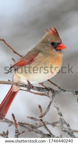 Bird so Amazing pic so very cool image
