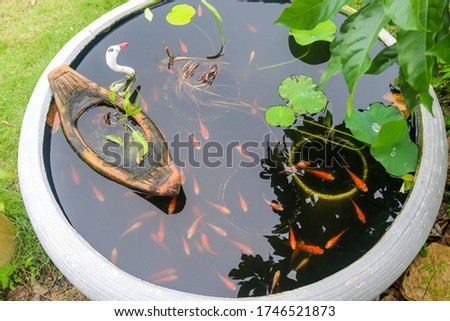 Red tilapia larvae in the pond in front of the house, Many red larvae, Red larvae swimming. #1746521873