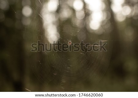 Blur picture of a large spider's web with a spider inside in the forest